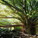 Cuidando las raíces